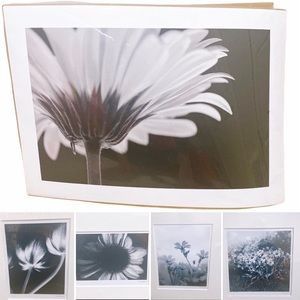 5/$20 or $5/Print - Black & White Floral Posters